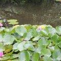 Janvier : entretenir le bassin et la pelouse