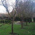 Janvier : quels soins pour les arbres fruitiers ?