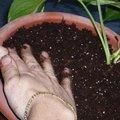 Travaux plantes d'intérieur : le surfaçage