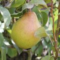 L'entretien des arbres fruitiers au printemps