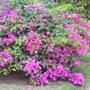Arbustes à floraison estivale