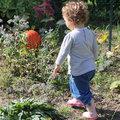 6 légumes pour commencer un potager avec les enfants