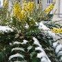 Arbustes décoratifs en hiver (fleurs, baies et écorces)