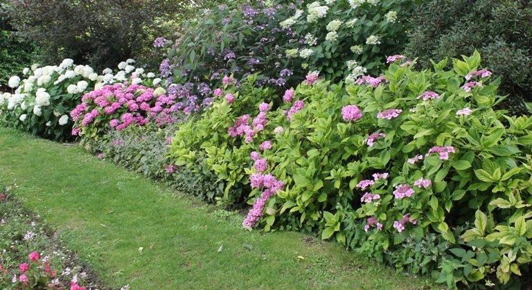 Acariens qui se cachent dans le jardin tout l'été