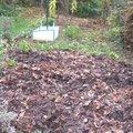 Quels légumes semer ou planter en janvier au jardin ?