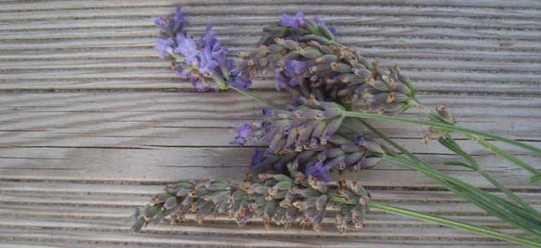 Fleurs De Lavande Du Bain En Passant Par L Infusion