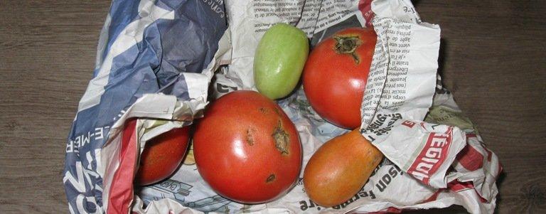 Du papier journal pour faire rougir les tomates vertes
