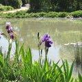 Hiverner les plantes aquatiques pour les conserver longtemps
