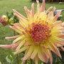 Bulbes d'été à planter au jardin de mars à mai