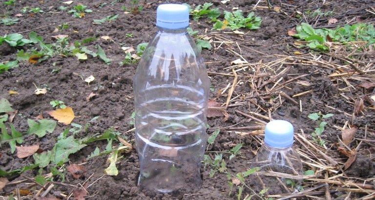 Cloches en plastique sur jeunes semis