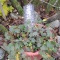 Recycler les bouteilles en plastique au jardin
