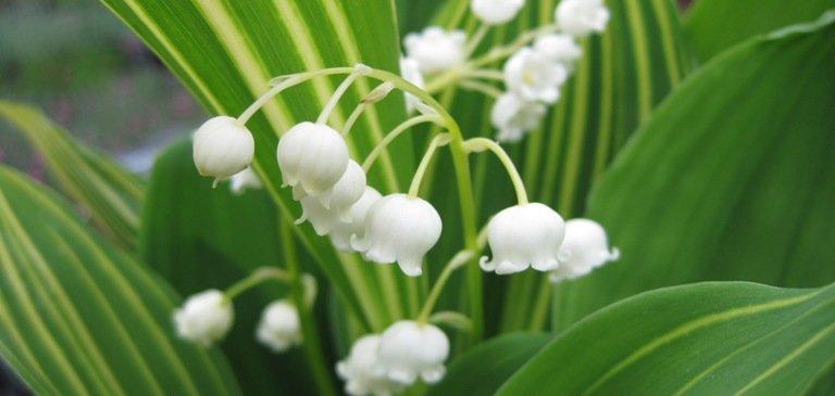 Toxicité des plantes dites