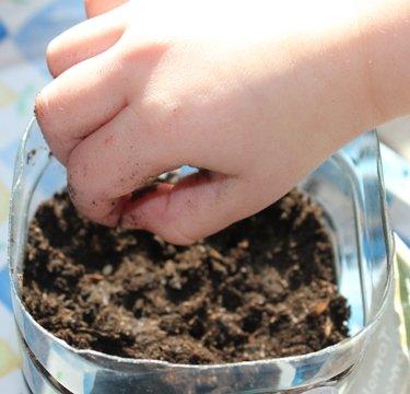 Mettre en place les graines