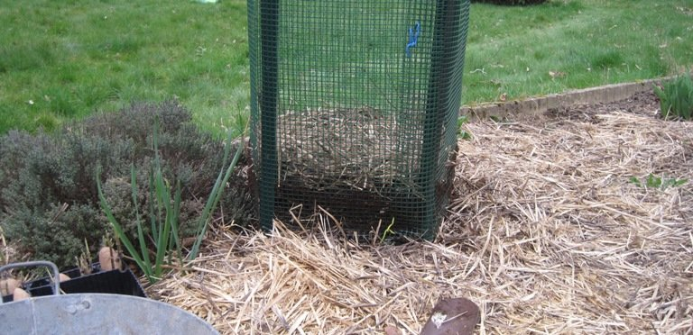 Cultiver à la verticale les pommes de terre