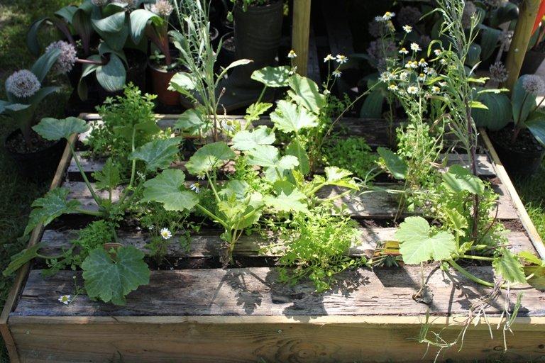 Des légumes à portée de mains