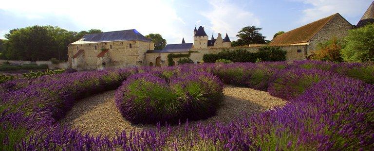 Parterres de lavande devant le Château du Rivau (37)