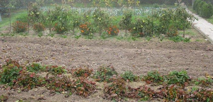 Semis d'hiver de légumes
