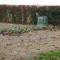 Quels amendements organiques pour le sol ?