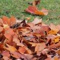 Comment faire un terreau de feuilles ?
