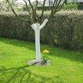 Pourquoi badigeonner de la chaux sur les arbres fruitiers ?