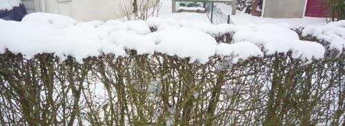 Un épais manteau blanc de neige
