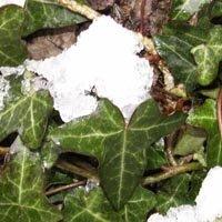 La neige dans mon jardin