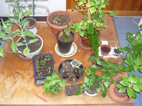 Bouture de plantes d'intérieur