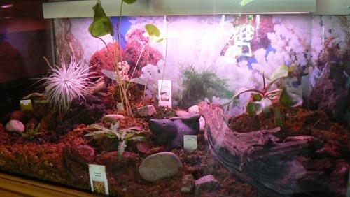 Le terrarium et ses plantes