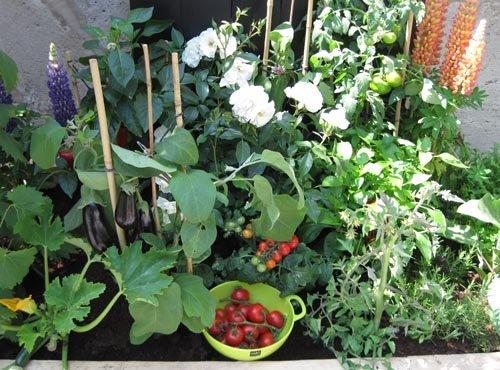 Un potager de légumes-fruits
