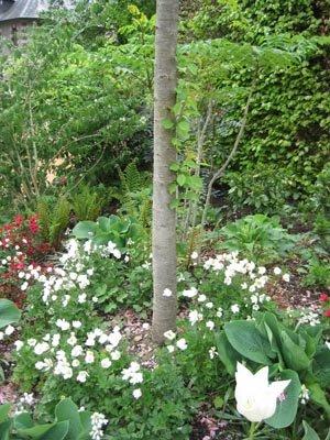Massif blanc et vert sous un arbre