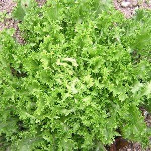 Qu'est-ce qu'un légume-feuille ?