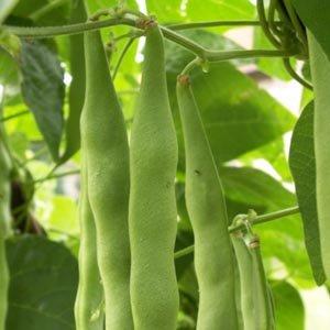 Qu'est-ce qu'un légume gousse ou un légume graine?