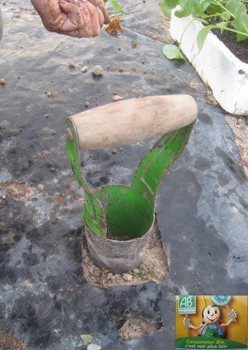 Plantation de choux - Plantoir