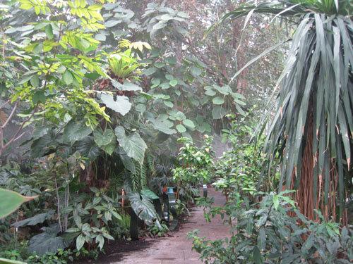 Serre des forêts tropicales humides