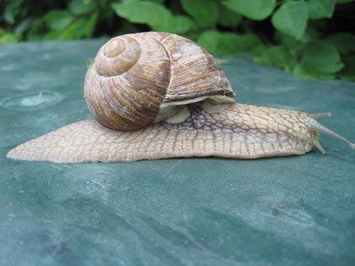 La vie de l'escargot