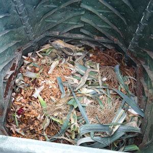 Au tas de compost