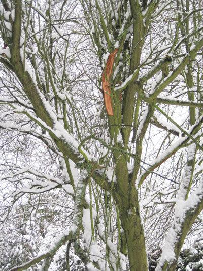 Branche d'arbres