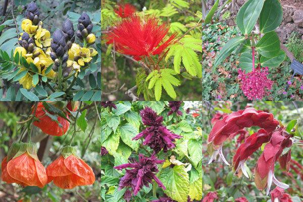 Arbres et arbustes fleuris