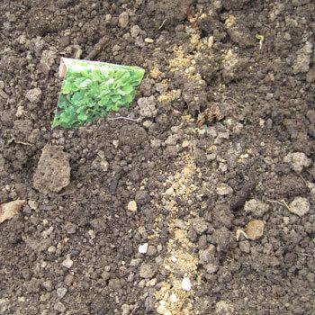 Astuce 1 de repérage des semences