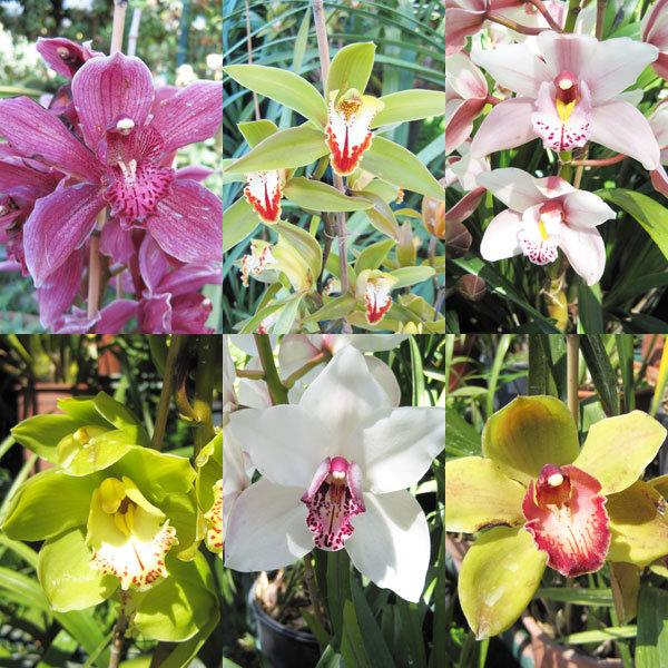 Monde d'orchidées