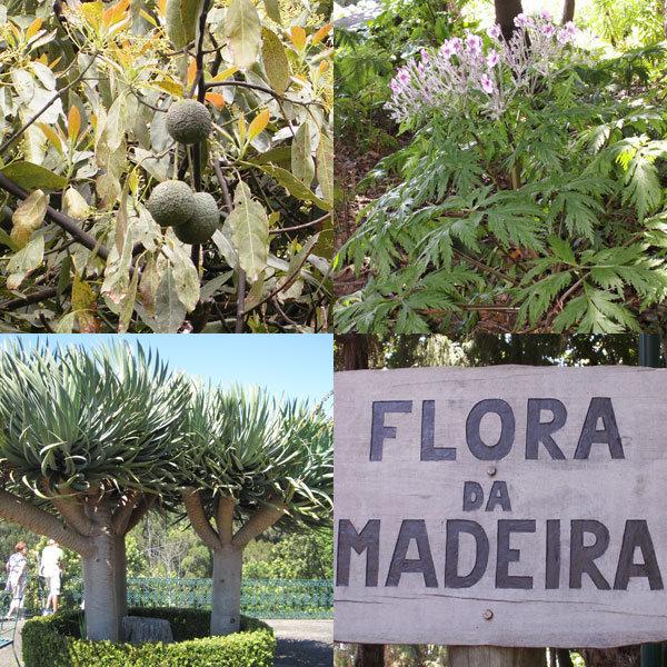 Particularités botaniques au Jardin Tropical
