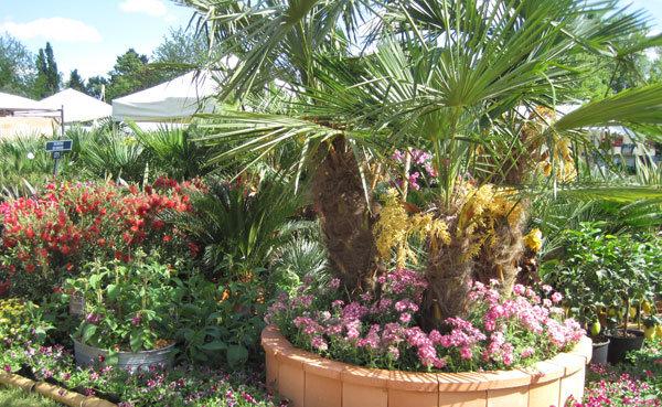 Les palmiers à Courson