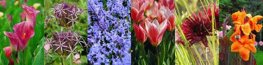 Large choix de bulbes d'été et de printemps