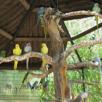 Paradis des oiseaux exotiques