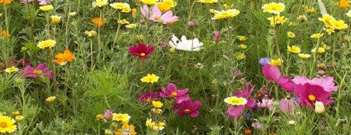 Avril Semis Et Plantations De Fleurs
