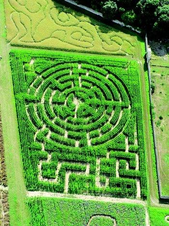 Labyrinthes végétaux de Gally (78)