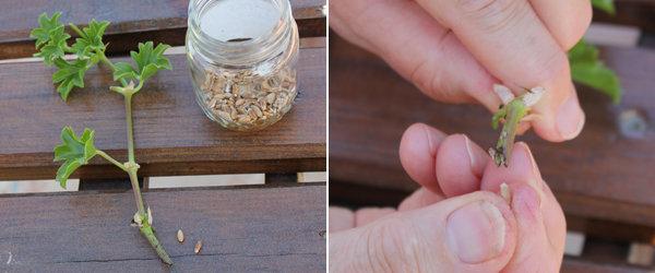 La méthode du grain de blé