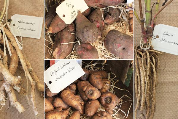 Légumes à redécouvrir