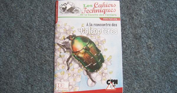 L'univers peu connu des coléoptères
