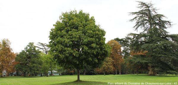 Quand planter un arbre ?